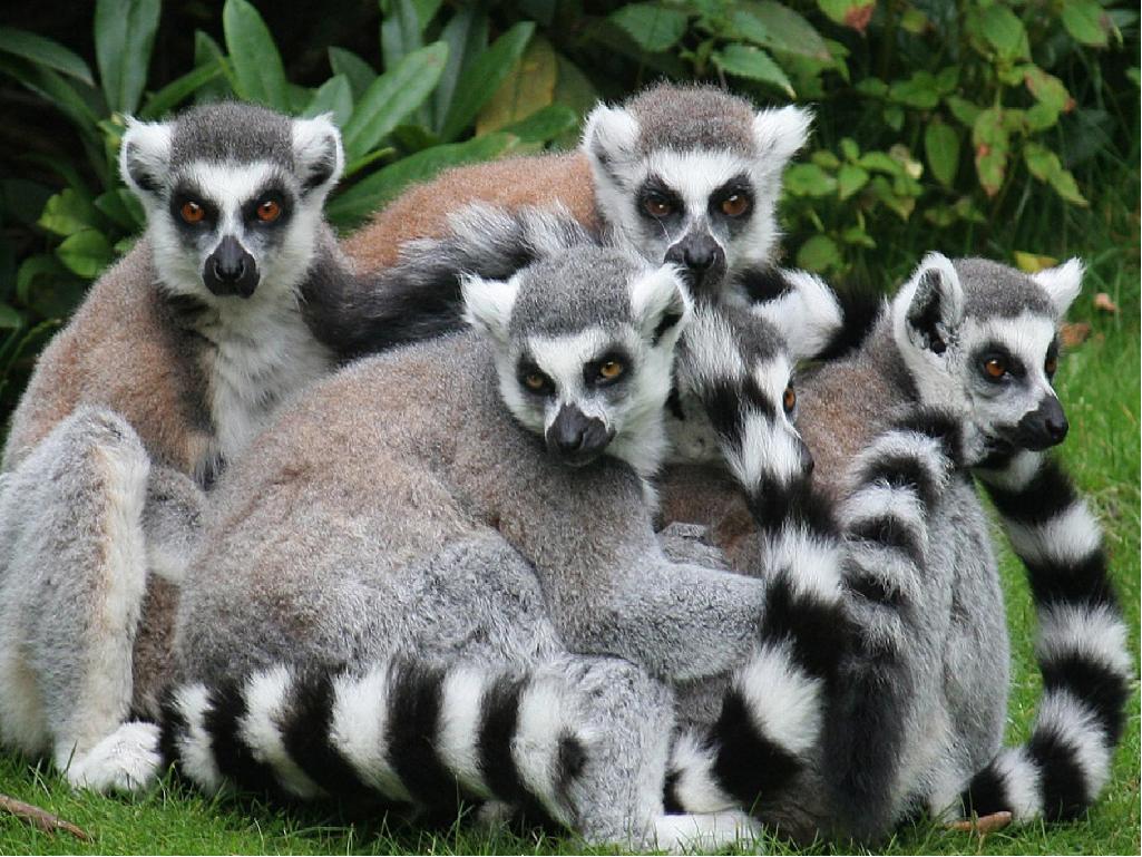 Зоопарк Сказка в Крыму